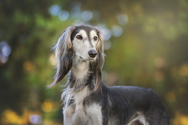 tipo de mantos en el perro