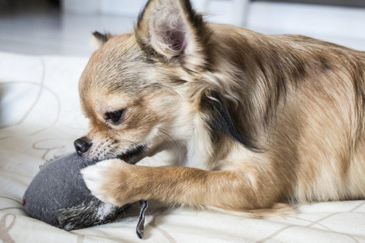 como jugar con tu perro ideas