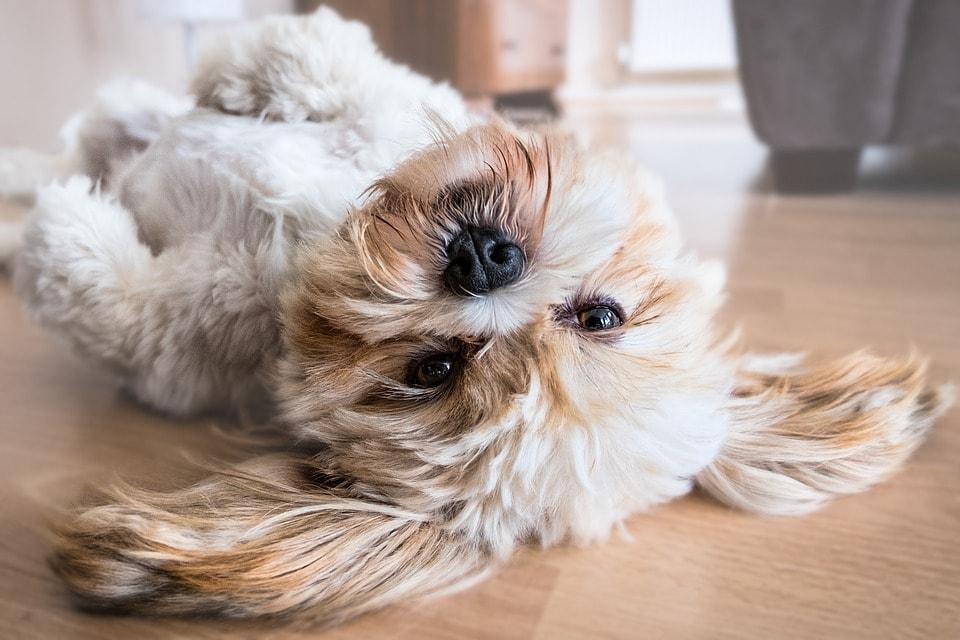 ejercicios perros en casa
