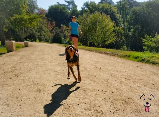 guarderia para perros en chamberi