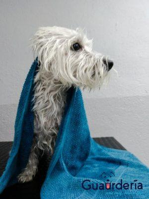 con qué frecuencia bañar perro