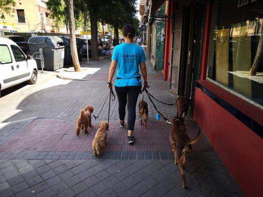 Vinculo canino y humano