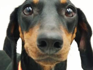 juegos de olfato para perros caseros