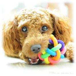 cachorro con juguete dentadura