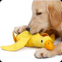cachorro con juguete dentadura blando