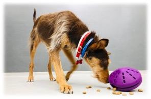 juguete perro alimentacion